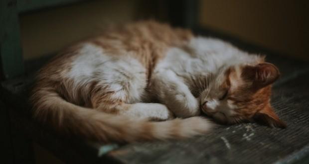 كيف أنظم نومي بعد السهر؟